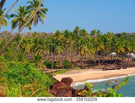 Coast Of The Sea With Palm Trees On Goa..