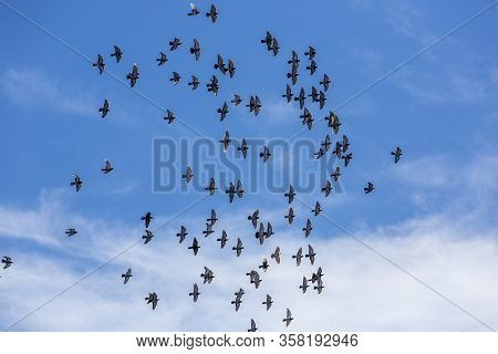 Pigeons Flee Togeether Into A Brilliant Blue Cloudy Sky