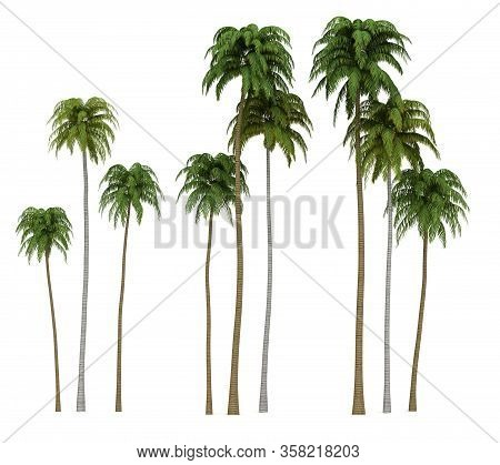 Coconut Palm Trees (isolated On White Background)