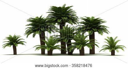 Sago Palm Trees (isolated On White Background)