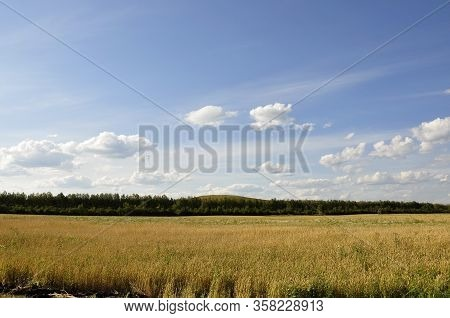 Yellow Field With Mountains And Forest Far Away And Blue Sky. Cultivated Area With Trees. Agricultur