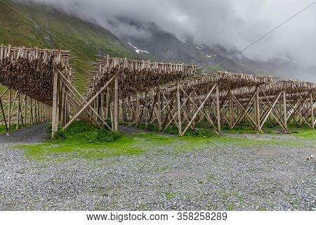 Codfishes Drying On Traditional Wooden Racks In Lofoten Islands, Norway, Europe, Selective Focus