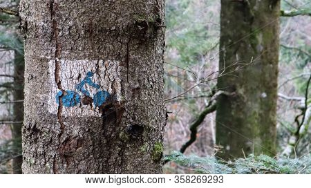 Image Of A Cyclist On A Tree In The Forest. Leaning On A Tree. A Sign For Cyclists To Show The Way.