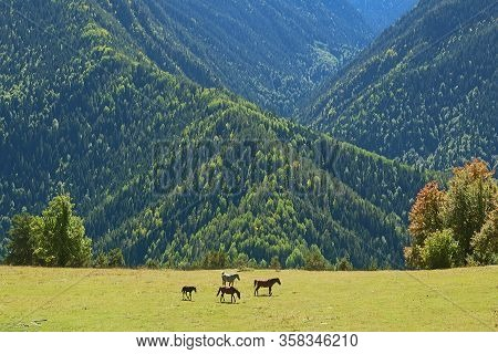 Group Of Horses In A Meadow On The Mountainside Of Mestia Highland, Svaneti Region, Georgia