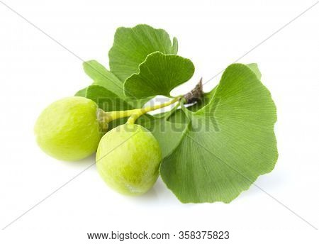 Ginkgo biloba fruit with leaves on white background
