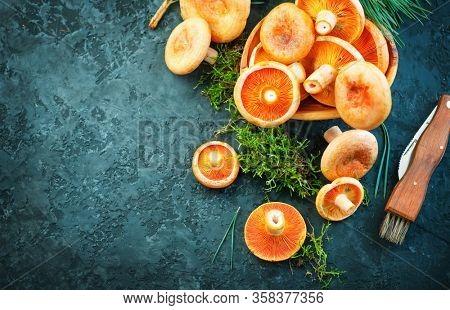 Raw wild Saffron milk cap mushrooms on dark old rustic background. Lactarius deliciosus, Rovellons, Niscalos mushroom closeup. Organic Fresh ceps with special knife on a table. Flat lay backdrop