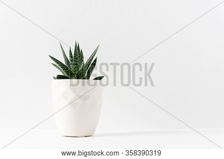 Green Succulent Houseplant In A White Vase On The Left Side Of  A White Table With Copy Space