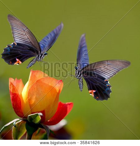 Butterfly on nice flower for adv or other purpose use poster