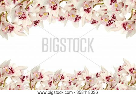 Orchid Flowers Isolated On White Background.flower Border. White Pink Orchid On A White Background F