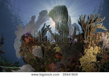 North Americas Coral Reefs