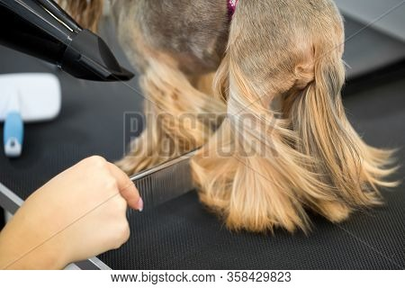 Grooming Animals, Grooming, Drying And Styling Dogs, Combing Wool. Grooming Master Cuts And Shaves,