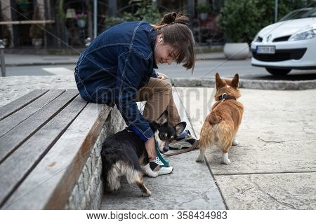 Belgrade, Serbia - 29.3.2020. Woman Walking Out Dogs. Woman Walking Out Her Dogs. Close Up Of Small
