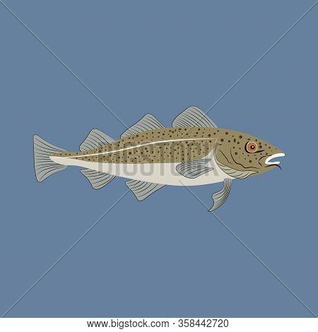 Codfish Fish Marine Nature Seafood Vector Illustration