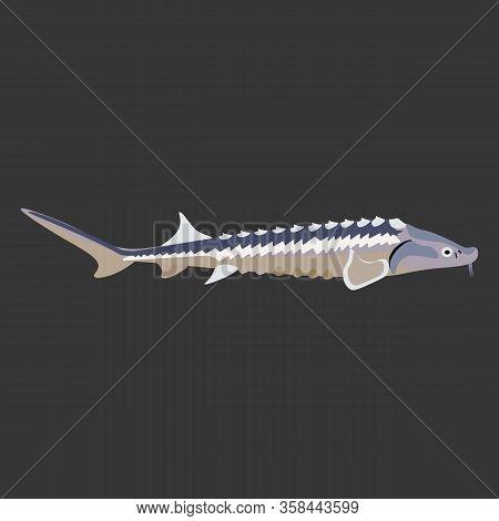 Sturgeon Fish Fresh Marine Seafood Vector Illustration
