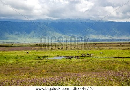 Ngorongoro Crater Conservation Area With Herds Of Grazing Herbivores On A Background Cumulus Clouds,