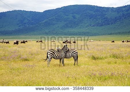 Ngorongoro Crater Conservation Area With Herds Of Grazing Herbivores On Flowering Meadows And Zebras