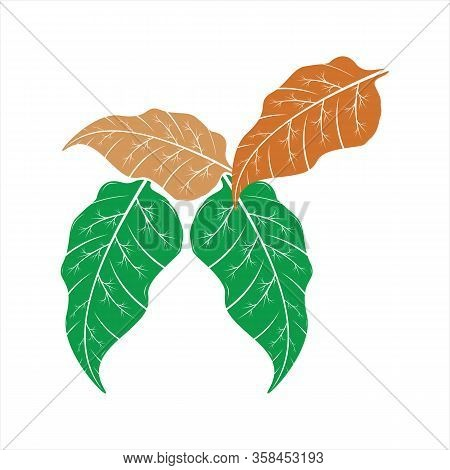 Leaf Icon, Isolated Leaf Icon With White Background, Simple Sign Leaf Icon, Green And Brown Leaf Ico