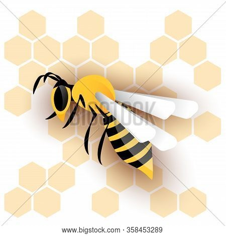 Honey Wasp And Wasp Nest, Honeycombs White Background Vector.