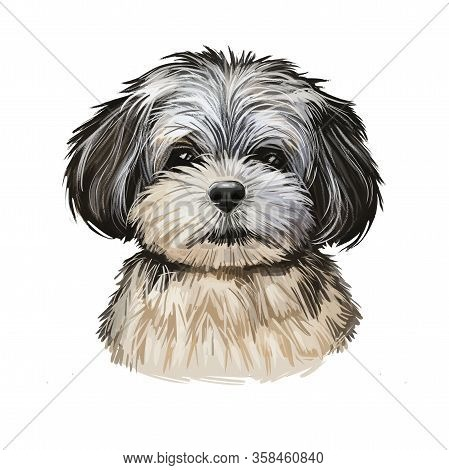 Pekapoo Puppy Cross Breed Of Pekinese Or Pekingese And Poodle Isolated On White. Digital Art Illustr