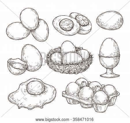 Eggs Sketch. Vintage Natural Egg, Broken Shell. Hand Drawn Farming Food, Animal Products. Drawing In