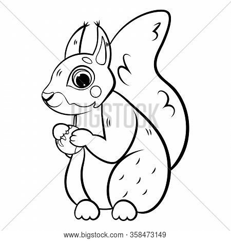 Cute Cartoon Squirrel With Hazelnut Vector Coloring Page Outline.  Coloring Book Of Forest Animals F