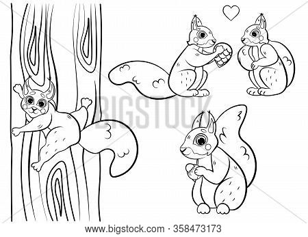Cute Cartoon Squirrel Vector Coloring Page Outline. Squirrel With Hazelnut, In Love And Climbing The