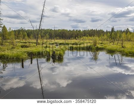 An Impassable Swamp In The Taiga Tundra Climate Zone In The Arkhangelsk Region Of The Russian Federa