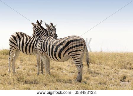 The Wildlife Of Etosha National Park In Namibia