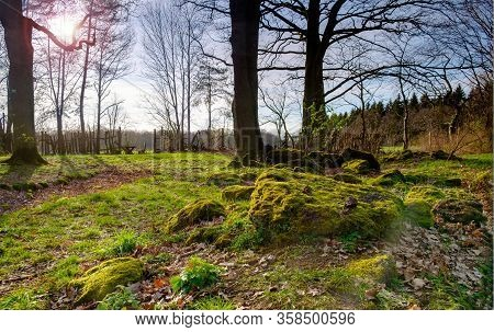 Green Mossy Backlit Coniferous Forest With Tree Trunks And Mossy Stones On Ground.
