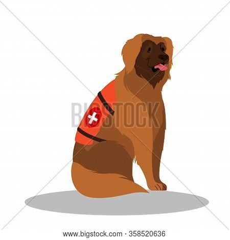 Dogs Rescuer, Leonberger. Cadaver Dog For Finding People.
