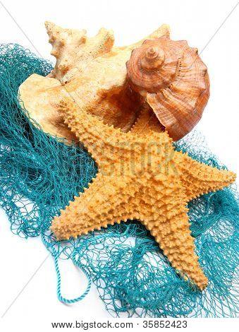 Sea shell and starfish on a fishing net. poster