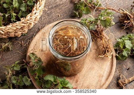 Preparation Of Homemade Tincture From Stinging Nettle Roots Collected In Early Spring
