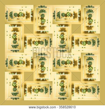 Creative Photo Of Set Of Photo In White Frames With Green Succulents With Shadows On Pastel Yellow B