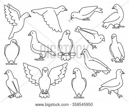 Pigeon Of Peace Outline Vector Illustration On White Background.vector Illustration Set Icon Dove Of