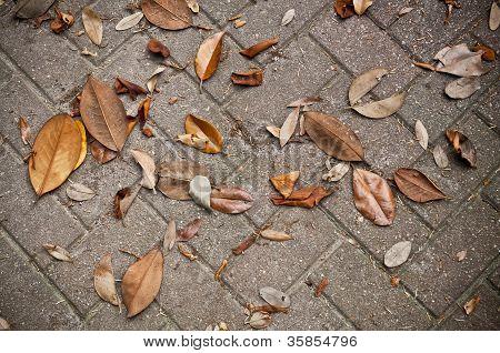 Leaves Fallen onto Stone Brick Sidewalk