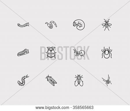 Insect Icons Set. Mosquito And Insect Icons With Pest, Black Widow Spider And Fly. Set Of Warning Fo