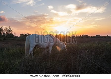 Camargue Horse In The Pasture At Sunset