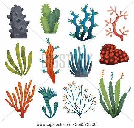 Set Of Watercolor Seaweed And Corals Isolated On White Background. Underwater Algae. Aquarium Plants
