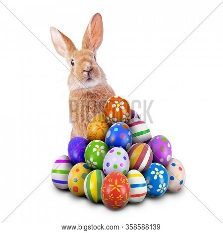 Curious, cute and funny Easter Bunny or Easter Rabbit peeking behind a pile of painted decorated or ornate Easter Eggs for Easter Egg Hunt Game isolated white background, cut out or cutout