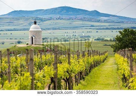 Vineyards, Palava region, South Moravia, Czech Republic