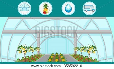 Exotic Fruit Trees Indoor Cultivation Illustration. Pineapples, Lemons Growing And Harvesting. Carto