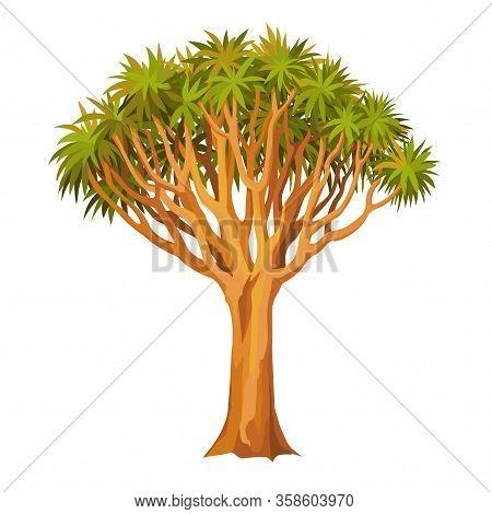 Animation Tree Dragon Dragon Blood Tree. Sacred Rare Plant. Africa, Morocco, Yemen. Vector Illustrat