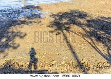 Selfie Shadow Of Solitary Female Photographer & Tree Shadows On Sunny Beach