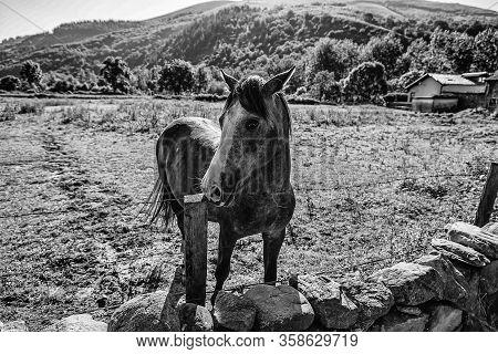 Free Horse On The Mountain