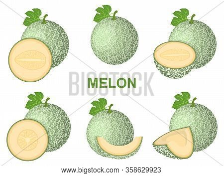 Set Of Fresh Whole, Half, Cut Slice Melon Fruit Isolated On White Background. Cantaloupe Melon. Summ