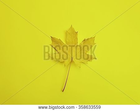 Autumn Maple Leaf On A Colored Background