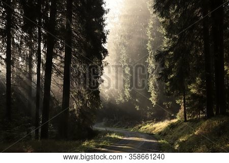 Autumnal forest road path foggy dawn sunrise sun morning Nature background scenic Nature background autumn woods pine spruce trees Nature background Nature background mist fog Nature background misty sunlight light Nature background rays Nature background