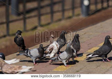 Pigeons On The Edge Of The Railway Platform.