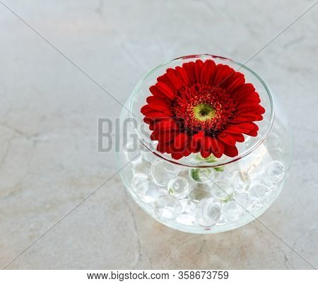 Beautiful Gerbera Flower In Glass On Background A Marble Surface. Decorative Element In The Interior
