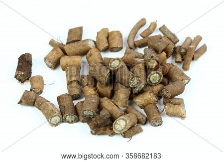 Fresh Root From Echinacea Angustifolia On White Background. Narrow Leaf Purple Cone Flower, The Most
